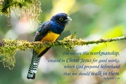 Bible Verses printed on beautiful bird photography.  Inspirational.