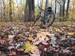 Bicycle lean against a tree amid colorful leaves in autumn forest. Active lifestyle seasonal foliage. Riding bicycle in autumn forest.