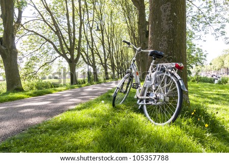 Bicycle leaning against tree in park, with tree lined road in the background.