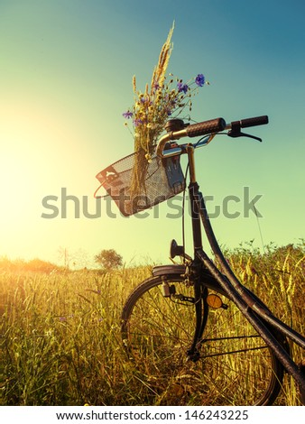 bicycle near a cornfield