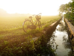 Bicycle on the edge of the rice fields in the morning haze. Get lost in the summer haze concept. Soft focus object.