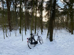 bicycle stands strapped in the woods. A beautiful winter landscape. A forest with tall trees and lots of snow. Clear snow and sunshine. There are no people. Amsterdam in February