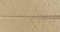 Bicycle tire trail on wet sand