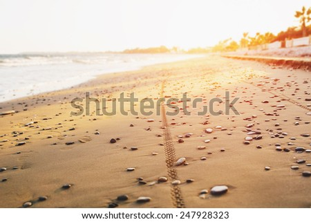 Bicycle tyre tracks on a sandy pebble beach at sunset. Off road cycling. Active life style concept.