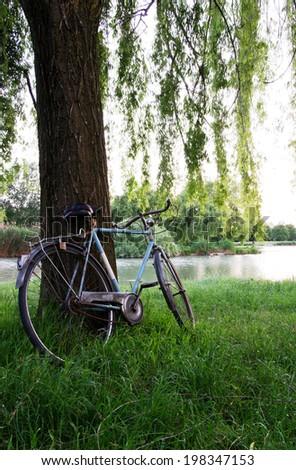 Bicycle under a tree in an italian garden - Shutterstock ID 198347153