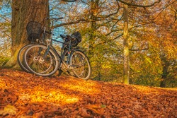 Bicycles lean against a tree amid colourful leaves in Autumn convey the Danish hygge concept. Bikes parked in a forest at fall as sun peeps through a thick foliage. Scandinavian lifestyle illustration