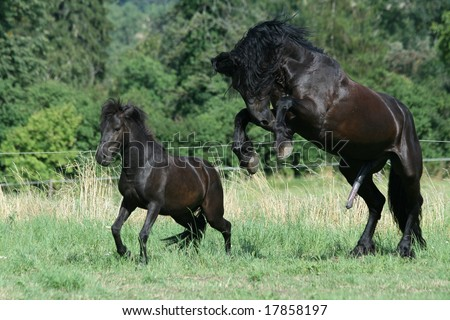 Big And Small Horses Stock Photo 17858197 : Shutterstock