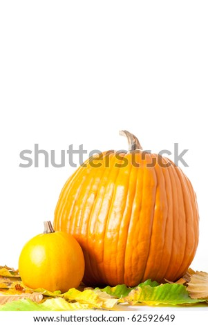 Big and small pumpkin ready for carving with autumn foliage, isolated on white background.