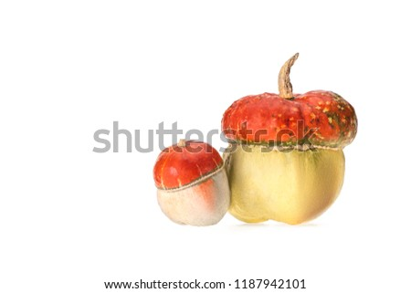 big and small ripe autumnal pumpkins isolated on white #1187942101