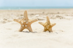 Big and small starfish on a beach. A couple of sea stars standing on golden sand near sea on sunny day. Romantic summer vacation concept. Summer wallpaper or background