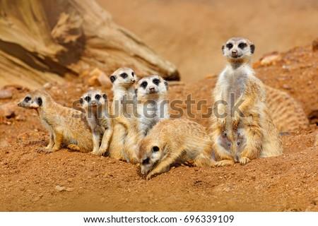 big animal family. funny image...