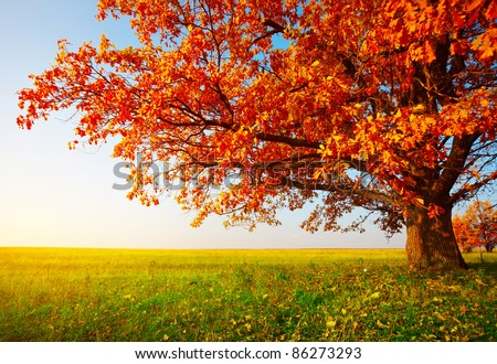 Big autumn oak and green grass on a meadow around #86273293
