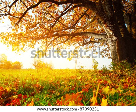 Big autumn oak and green grass with yellow leaves on a meadow around