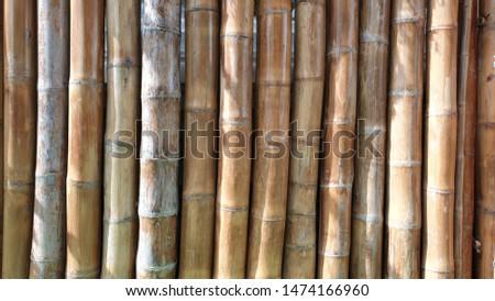 Big bamboo. Big bamboo wall background. #1474166960