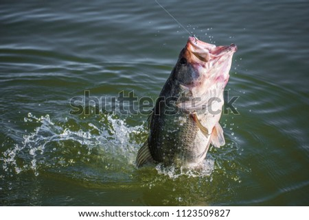 Big! Bass Fishing Splash