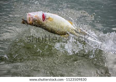 Big! Bass Fishing Splash