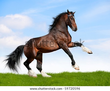 Big bay horse in field - stock photo
