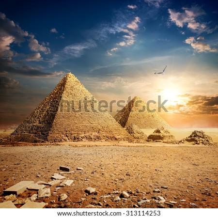 Big bird over pyramids at the sunset
