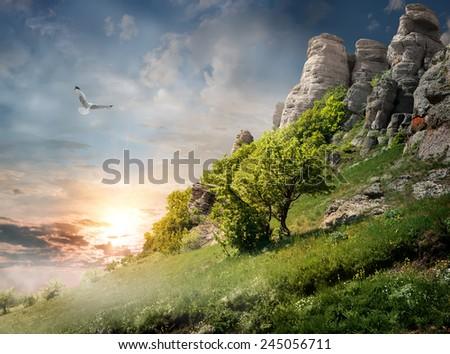 Big bird over trees on the mountain