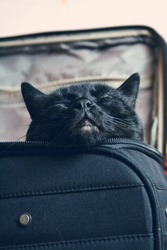 Big black cat sleeping in the suitcase