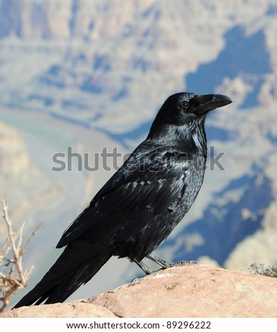big black crow and blurred mountain's background