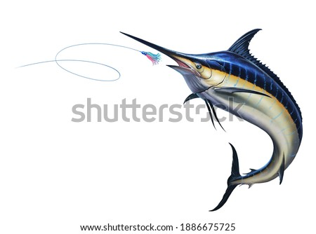 Big black marlin jumps out of the sea Bait Sea Octopus Skirt. Black Swordfish extreme fishing on the high seas. Holidays in the tropics and hobbies.