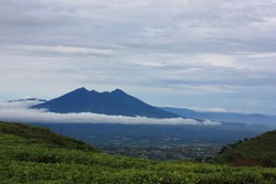 Big blue mountain under the cloudy sky with tea plantation foreground. Clouds belted mountain. Mount Gede or Gunung Gede is a stratovolcano tropical mountain located in Bogor, West Java, Indonesia.