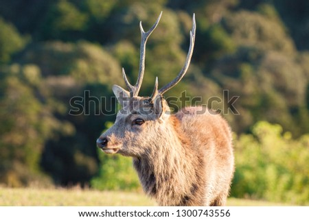 Big brown adult deer with horns standing on the ground in summer day #1300743556