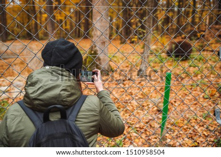 big brown bear in rehabilitation center autumn season fall woman taking picture through the fence