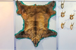 Big Brown European Bear at Wall Taxidermy Trophy