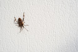 Big brown insect crawling on with plaster wall of building with rough texture