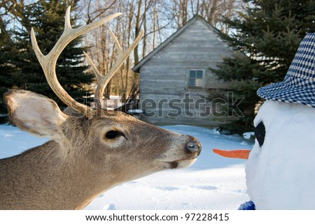 big buck going for the snowman's carrot nose