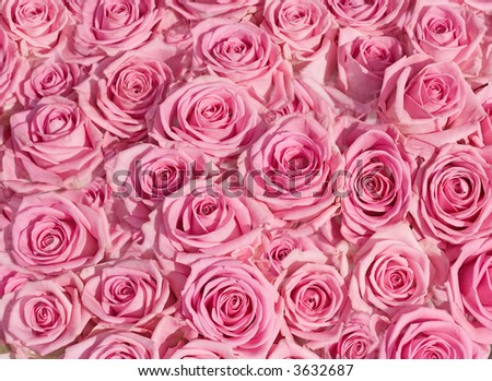 big bunch of multiple pink roses of a bride on a wedding from top, from above. kind of texture background image roses