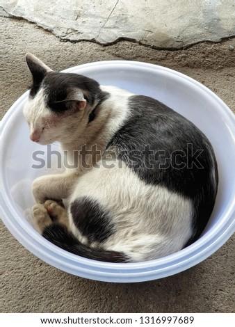 big cat in big bowl #1316997689