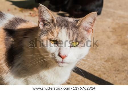 Big cat with big eyes #1196762914