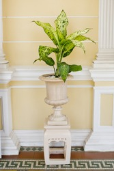 Big ceramic white pot with small tree in the house with vintage wall background