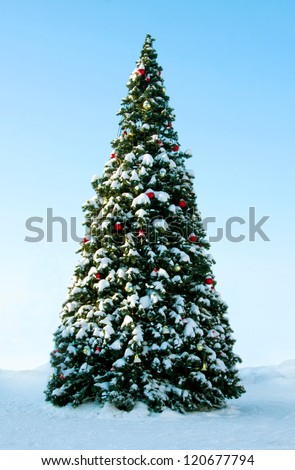 Big Christmas tree on snow background of blue sky