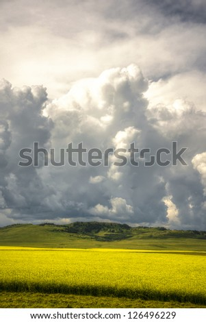 Big clouds over field of canola in Alberta Canada