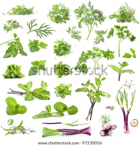 Big collection leaves parsley, mint, dill and onion isolated on white background, closeup, macro