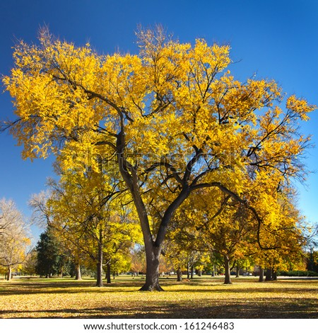 Big colorful fall tree on a sunny day in City Park - Denver, Colorado