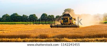 big combine harvester threshing in the sunset.