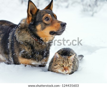 Big dog and cat sitting together in the snow
