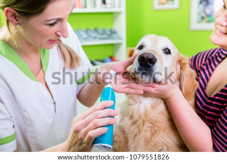 Big dog getting dental care by woman at pet parlor #1079551826