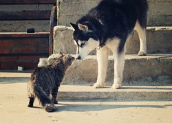 Big dog sniffing little cat outdoors. toned
