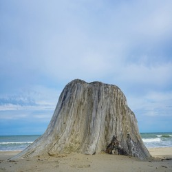 big dry tree trunk on a sandy beach in sea background. large dry tree trunk on  island on blue cloudy sky  background.