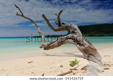 Big dry tree trunk pointing to the NNE half-buried on the white sands at the northern tip of the beach with Dolphin island on the background. Port Olry-Espiritu Santo island-Sanma province-Vanuatu. Stock fotó ©