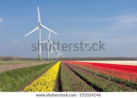 Big Dutch colorful tulip fields with windturbines