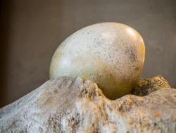 Big egg in nest stone