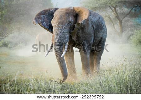 stock photo big elephant 252395752 - Каталог — Фотообои «Животные»