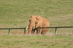 Big elephant in the nature park of Cabarceno in Spain